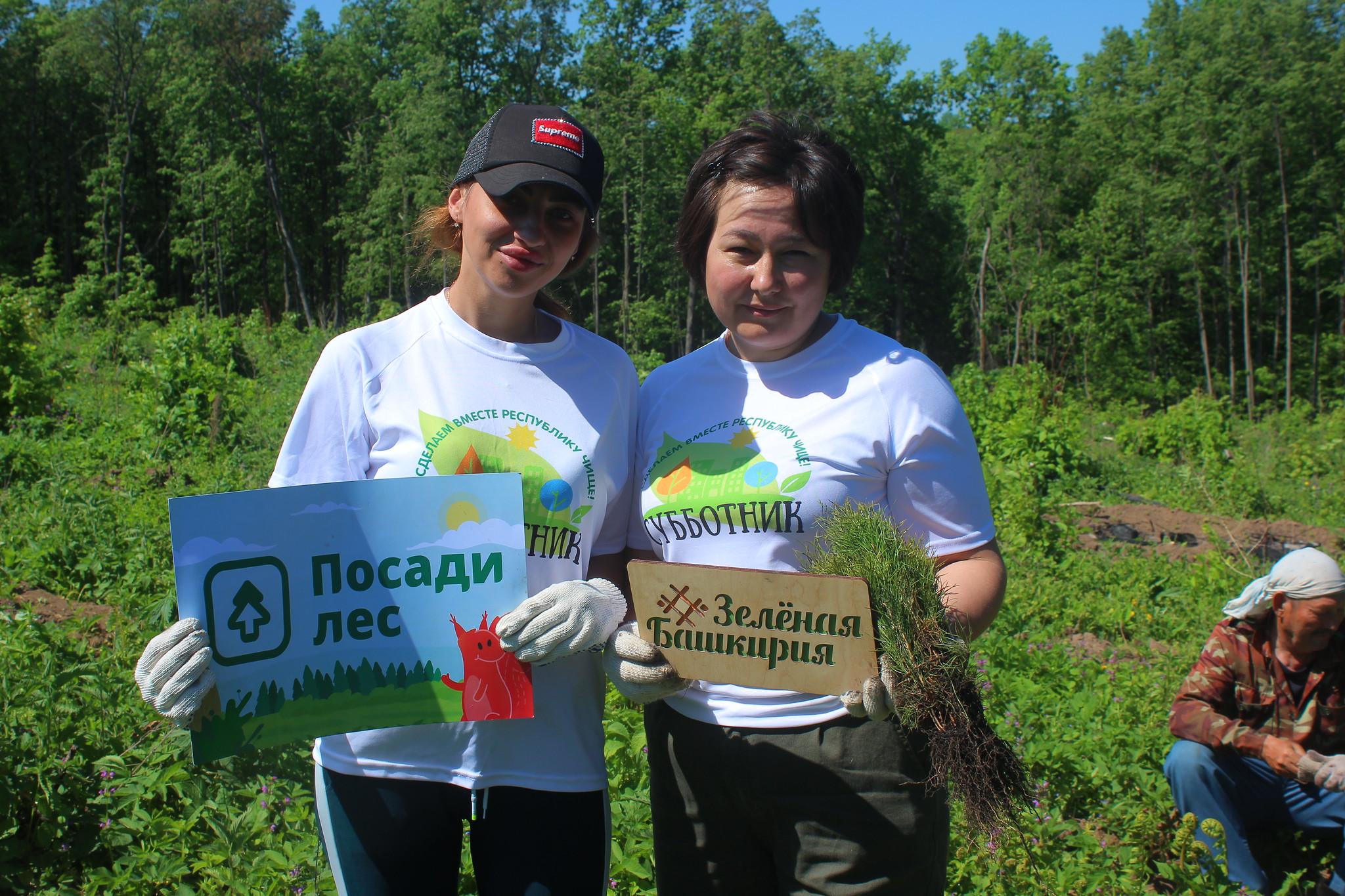 Благодаря проекту каждый человек может принять участие в восстановлении лесов, пострадавших от пожаров и браконьеров