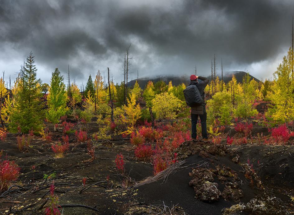 Мертвый лес рядом с вулканом Толбачик. Полуостров Камчатка, Россия