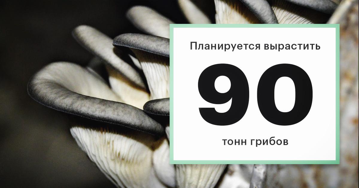 Фото: Владимир Аксенов