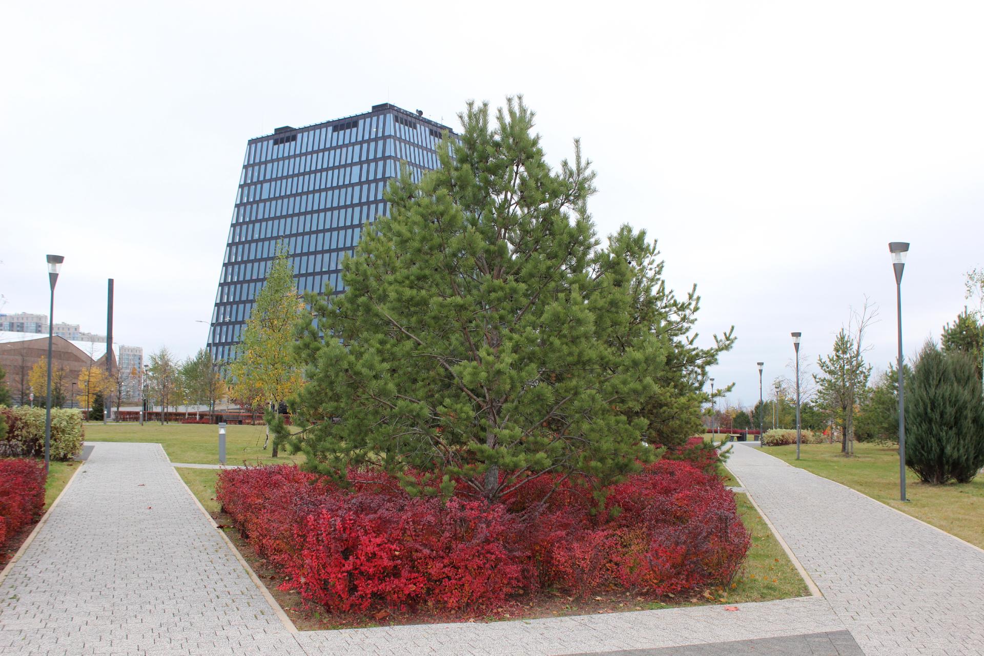 Виды инновационного центра «Сколково»
