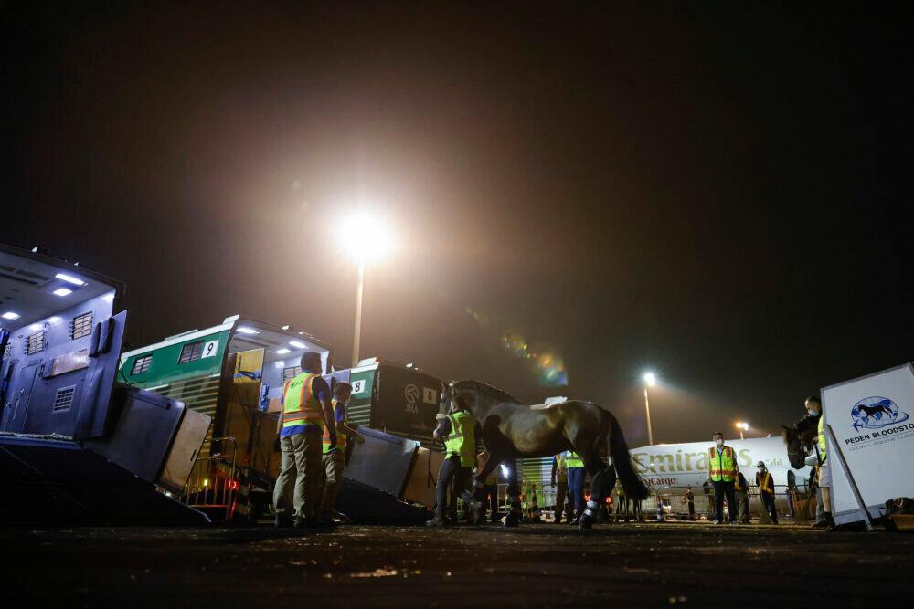 На Олимпиаду в Токио грузовыми самолетами доставляли лошадей. Для этого потребовалось 8 бортов