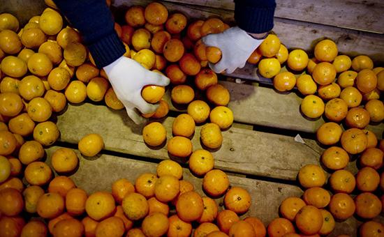 Узбекистан запретил вывозить фурами овощи и фрукты