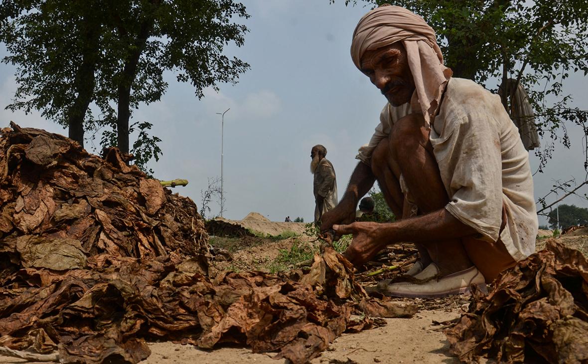 Табачная ферма в Индии