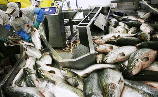 Завод по переработке лосося в Чили