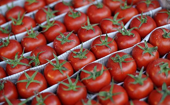 pomidorun qiyməti
