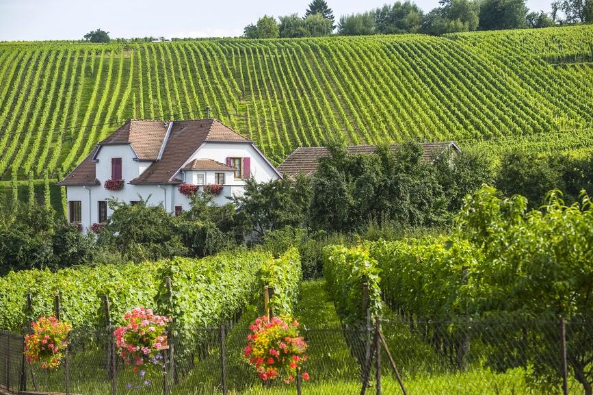 Купить виноградник во франции дом в лос анджелесе купить