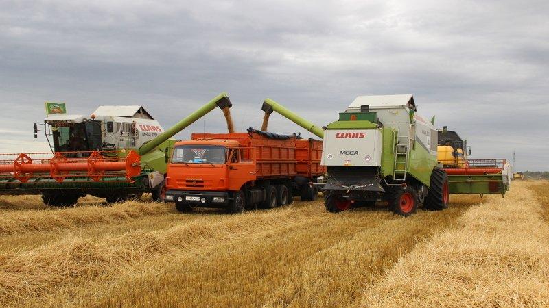 Агрызский район первым закончил уборку зерна с рекордно низким урожаем