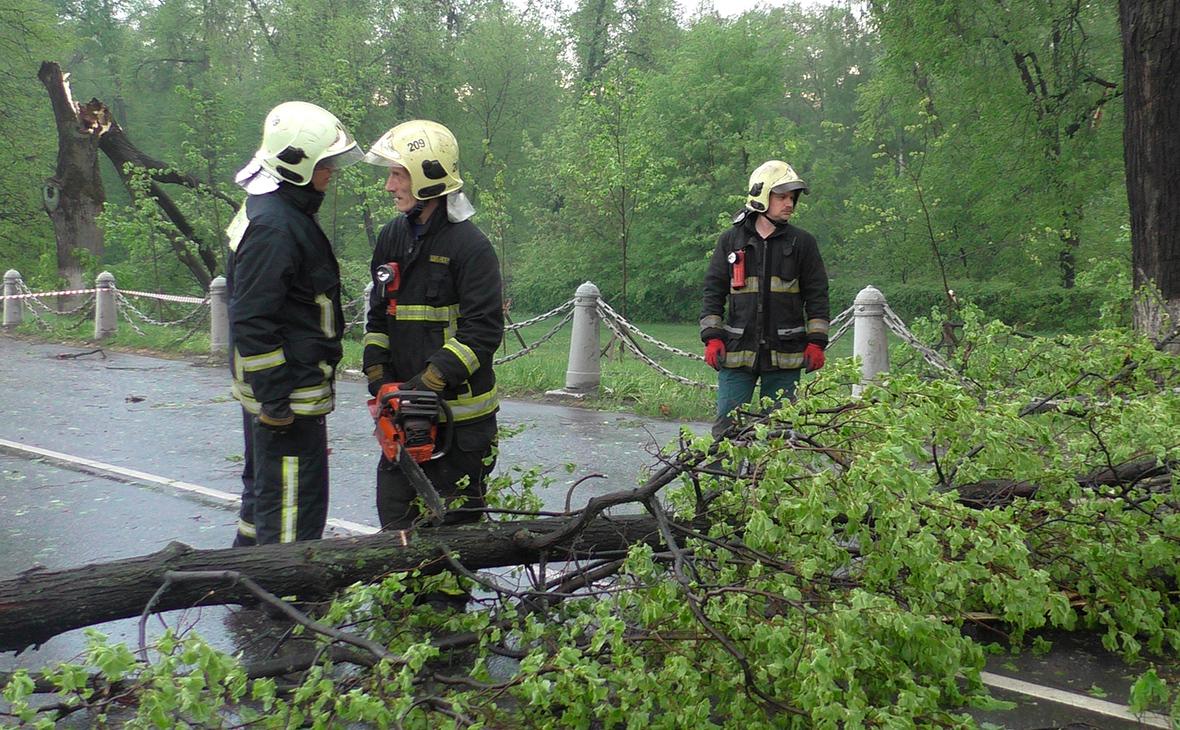 Число пострадавших при падении деревьев в Подмосковье выросло до пяти