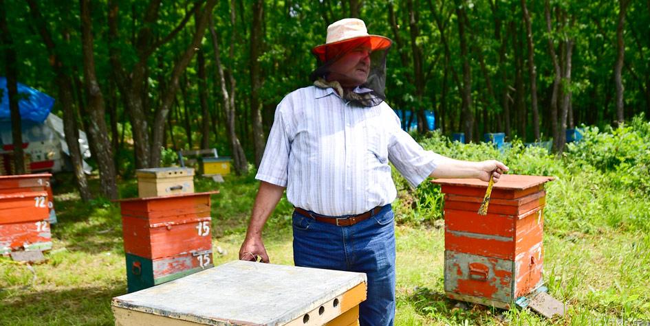 Один из первых пользователей «дальневосточного гектара» на пасеке в Приморье