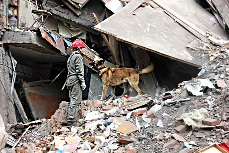 Служебная собака в поисках возможных жертв