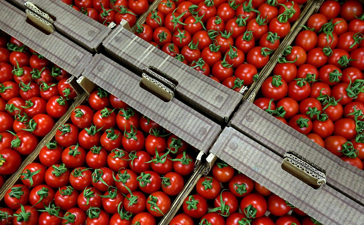 Россия разрешила ввоз турецких помидоров