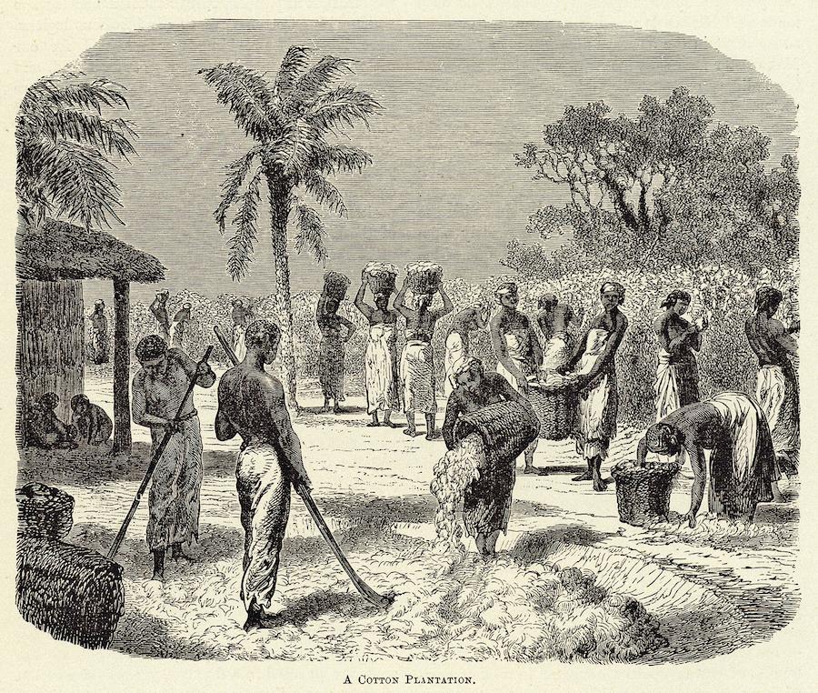 Хлопковая плантация. Гравюра, XIX век