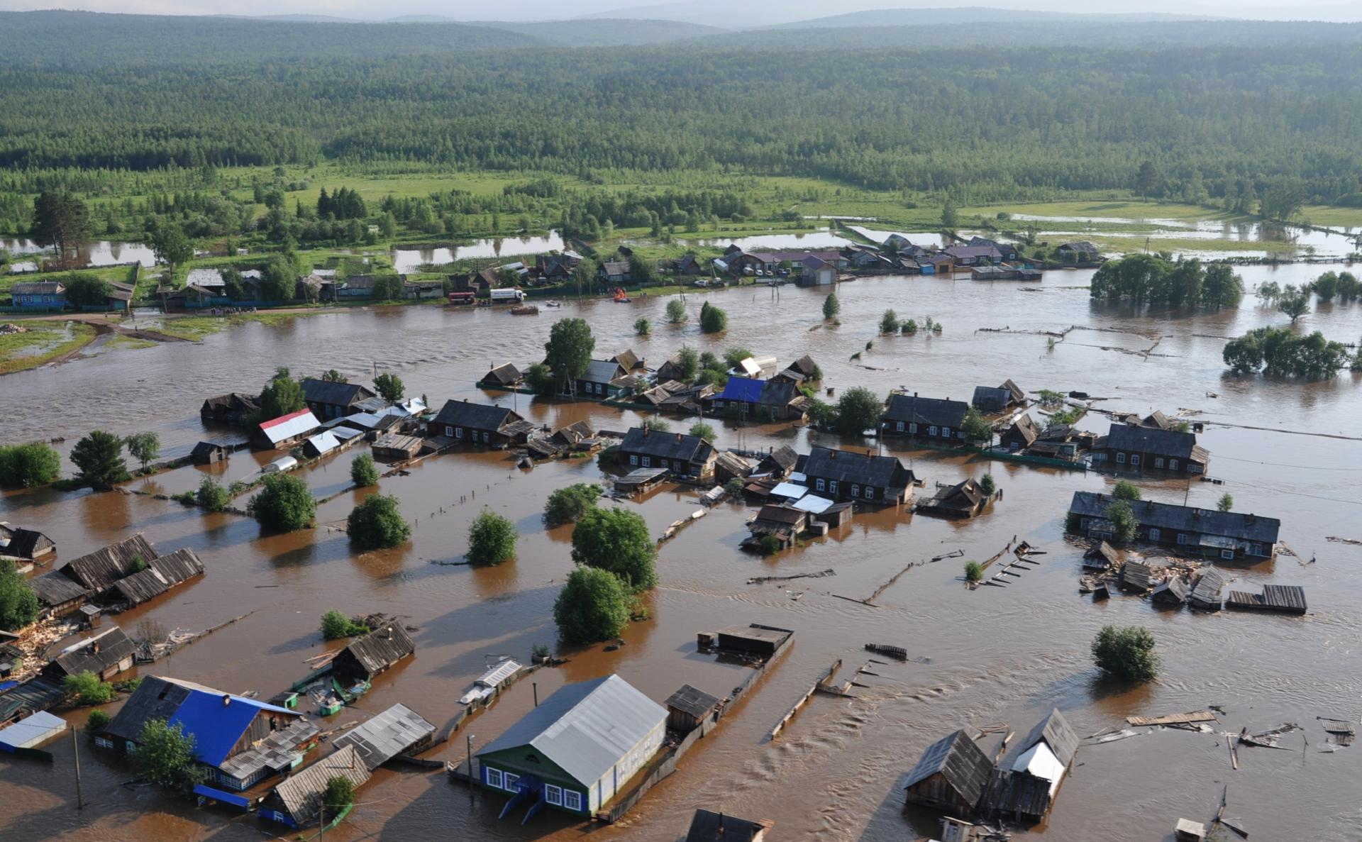 фото тулун наводнение хорошо разветвленные стебли