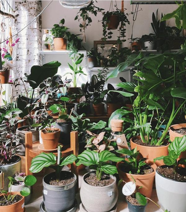 Фото:instagram.com / plantmemoscow