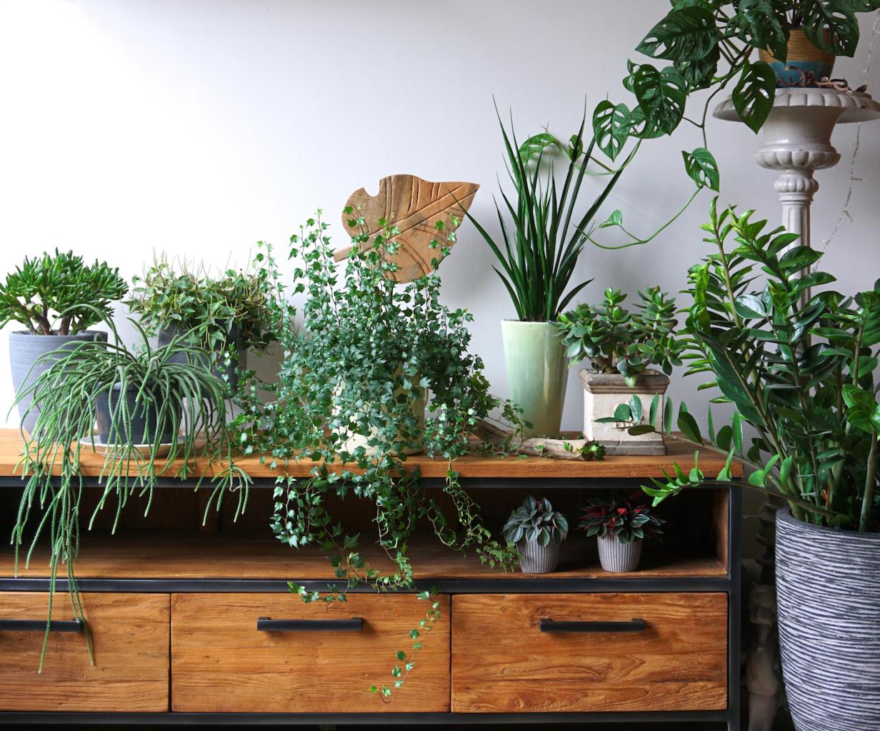 Создать прохладу в комнате могут и комнатные растения, они хорошо очищают воздух. Кроме того, растения сейчас очень востребованы в интерьерах