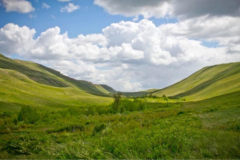 Фото:«Объединенная дирекция государственных природных заповедников «Оренбургский» и «Шайтан-Тау»»
