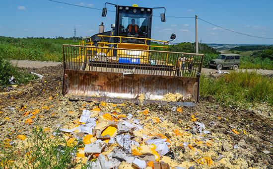 Уничтожение импортного сыра на полигоне
