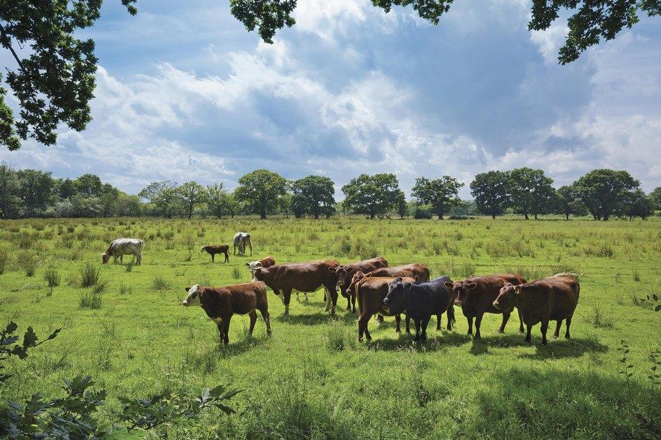 Английские фермеры занимаются скотоводством иземледелием прямо натерритории национального парка