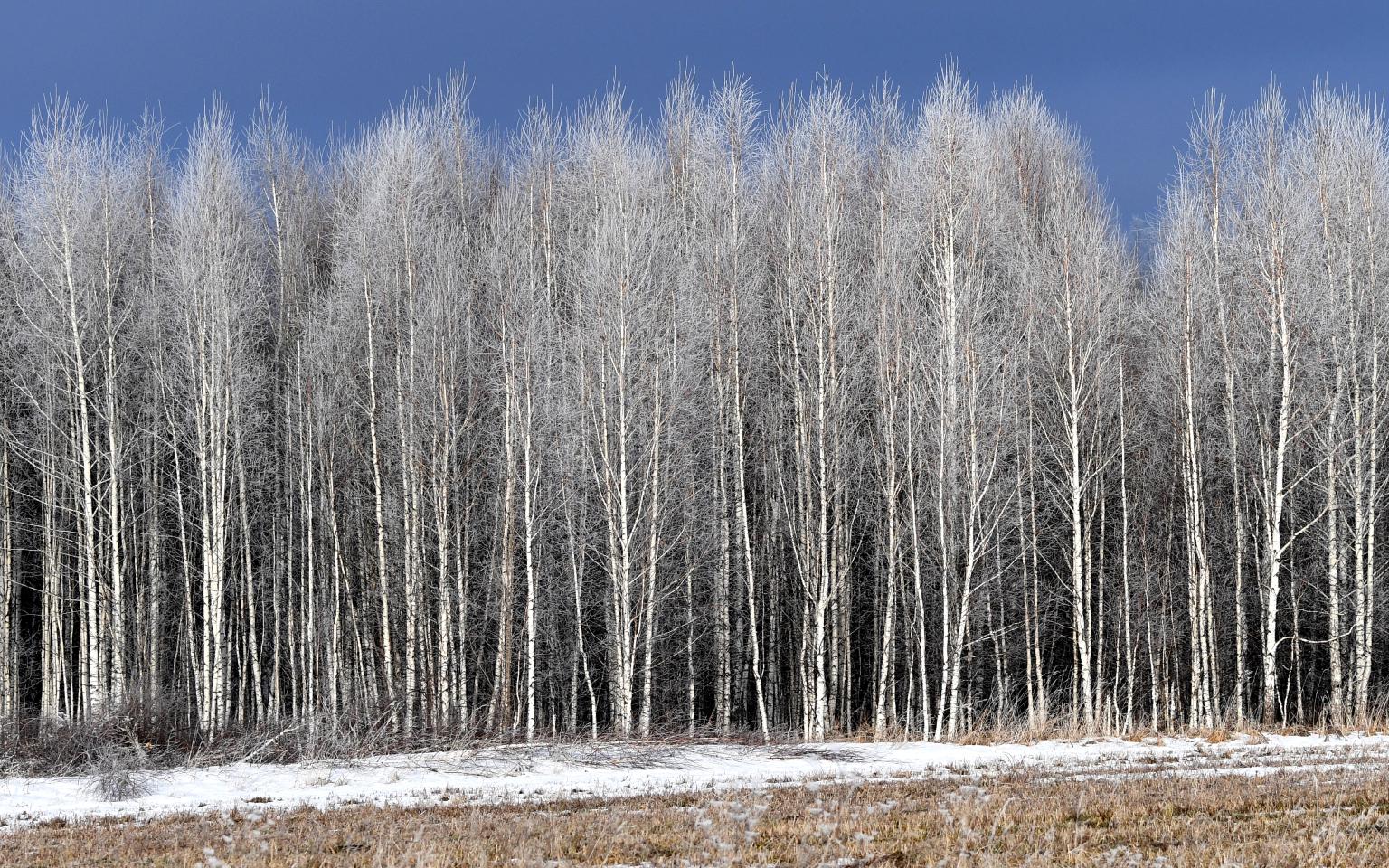 Фото: Илья Наймушин / РИА Новости