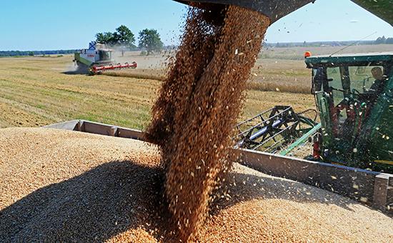 Уборка урожая зерновых на полях Калининградской области