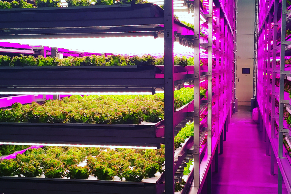 Инновации в растениеводстве гидропоника украина где купить героин форум