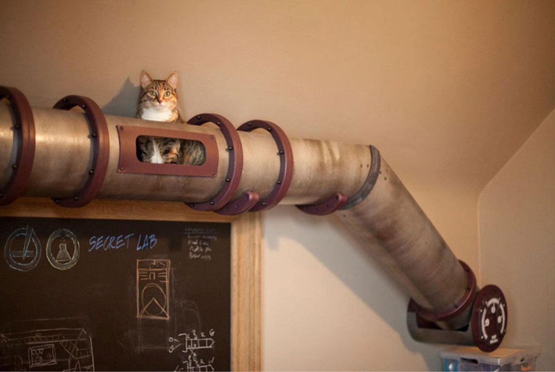 Труба-тоннель для кошек