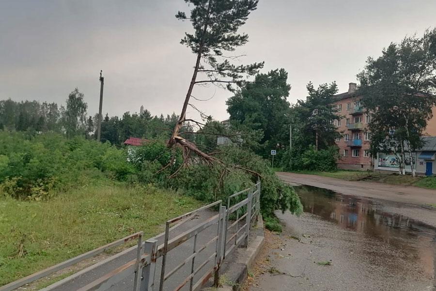 Фото:Роман Крылов / VK