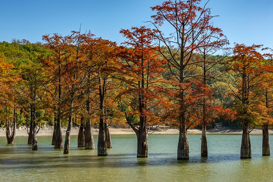 Кипарисы на озере Сукко близ города Анапа. Краснодарский край