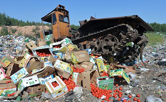 Уничтожение помидоров, задержанных на российско-белорусской границе, на полигоне бытовых отходов возле деревни Гусино в Смоленской области, август 2015 года