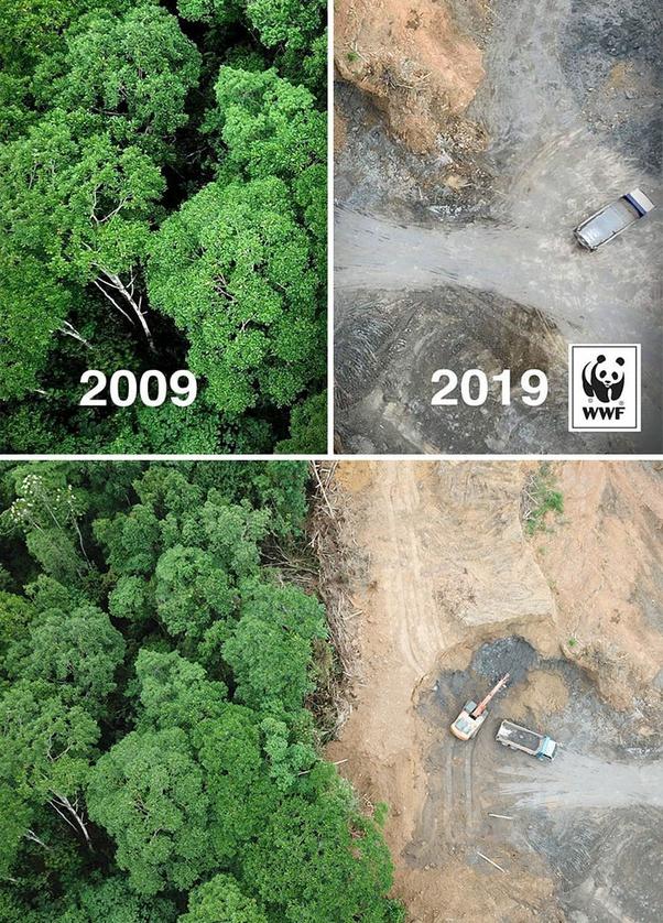 Сверху— отредактированный пользователем Reddit снимок. Снизу— оригинал из фотобанка Shutterstock. На нем изображены результаты вырубки тропического леса в Малайзии для создания места под плантации масличных пальм