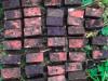 Фото:пресс-служба Пограничного управления ФСБ России по Санкт-Петербургу и Ленинградской области