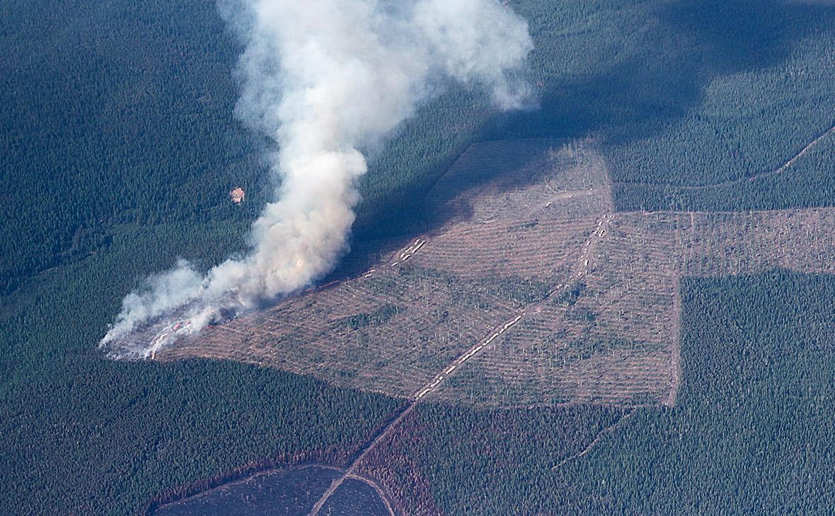Генпрокуратура нашла следы преднамеренных поджогов в сибирских лесах