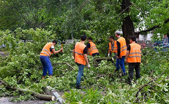 Из-за реновации в ряде районов Москвы срубят каждое четвертое дерево