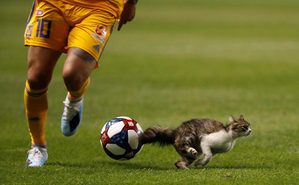 Фото:Jeff Swinger / Reuters