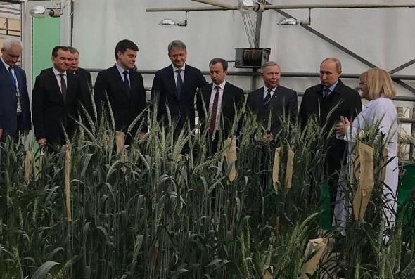 Путин посетил селекционную теплицу Национального центра зерна