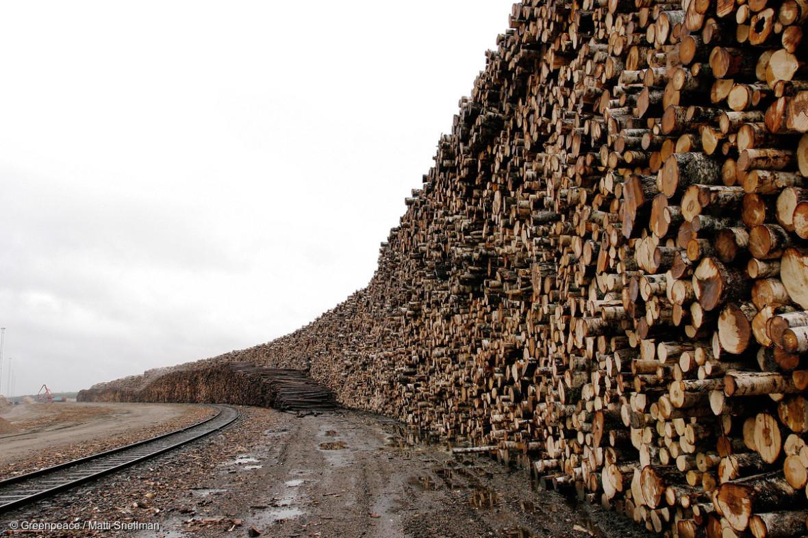 Участники группы помогали иностранным компаниям оформить легальные документы при покупке леса