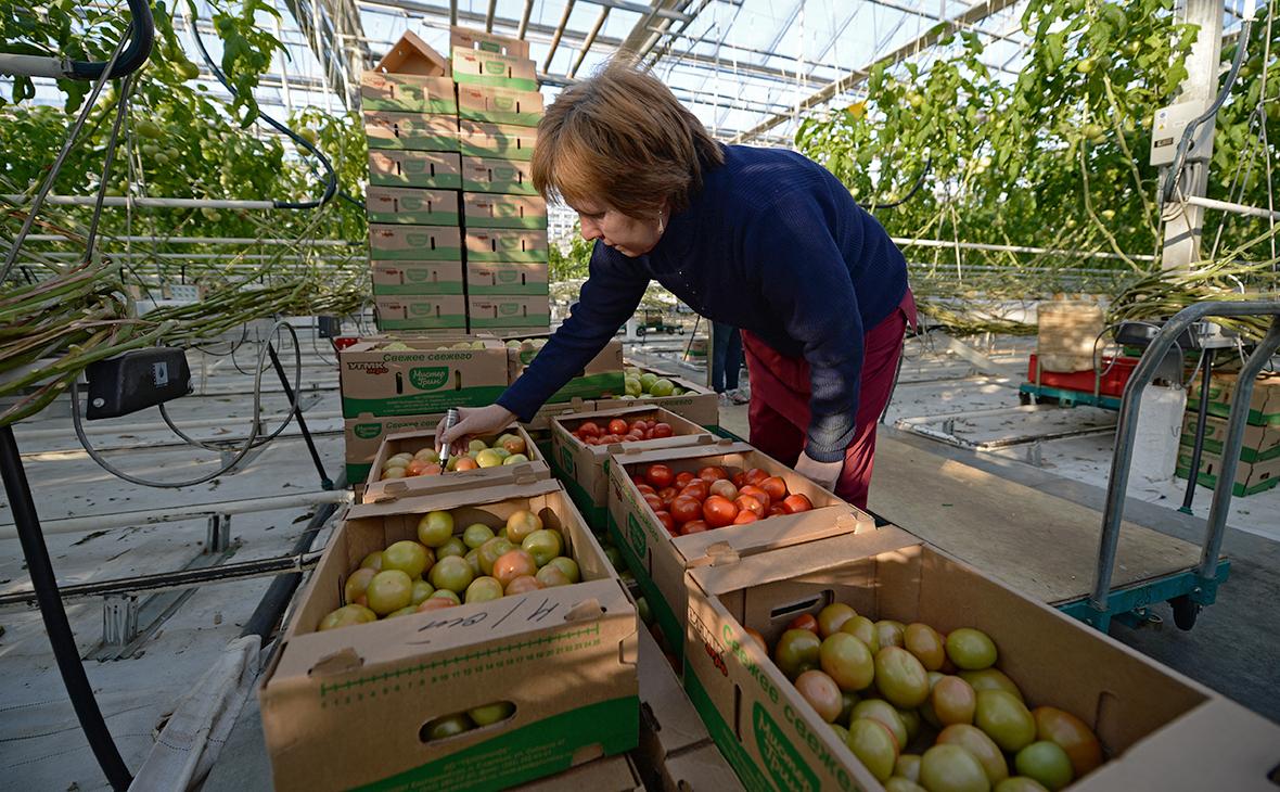 Минсельхоз предложил ограничить госзакупки импортных томатов и огурцов