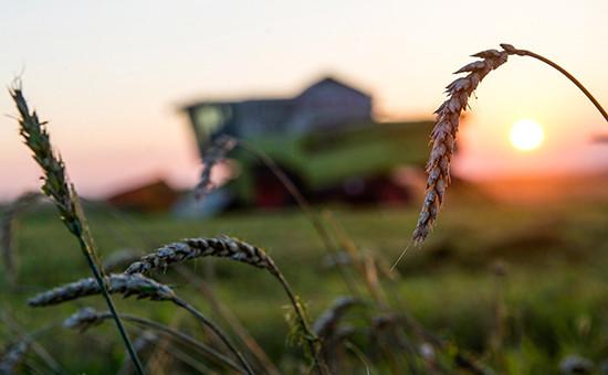 Уборка урожая пшеницы в России
