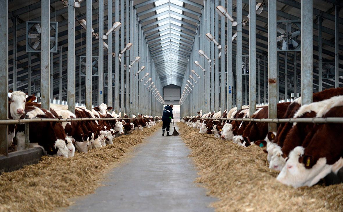 Подешевевшие зерно и свинина испортили настроения российских аграриев