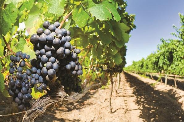 Сам такой: глава «Цимлянских вин» обвинил в крахе завода предшественника