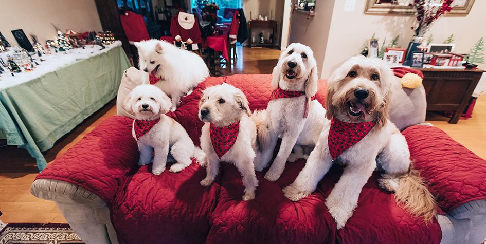 10 лучших пород собак для жизни в квартире