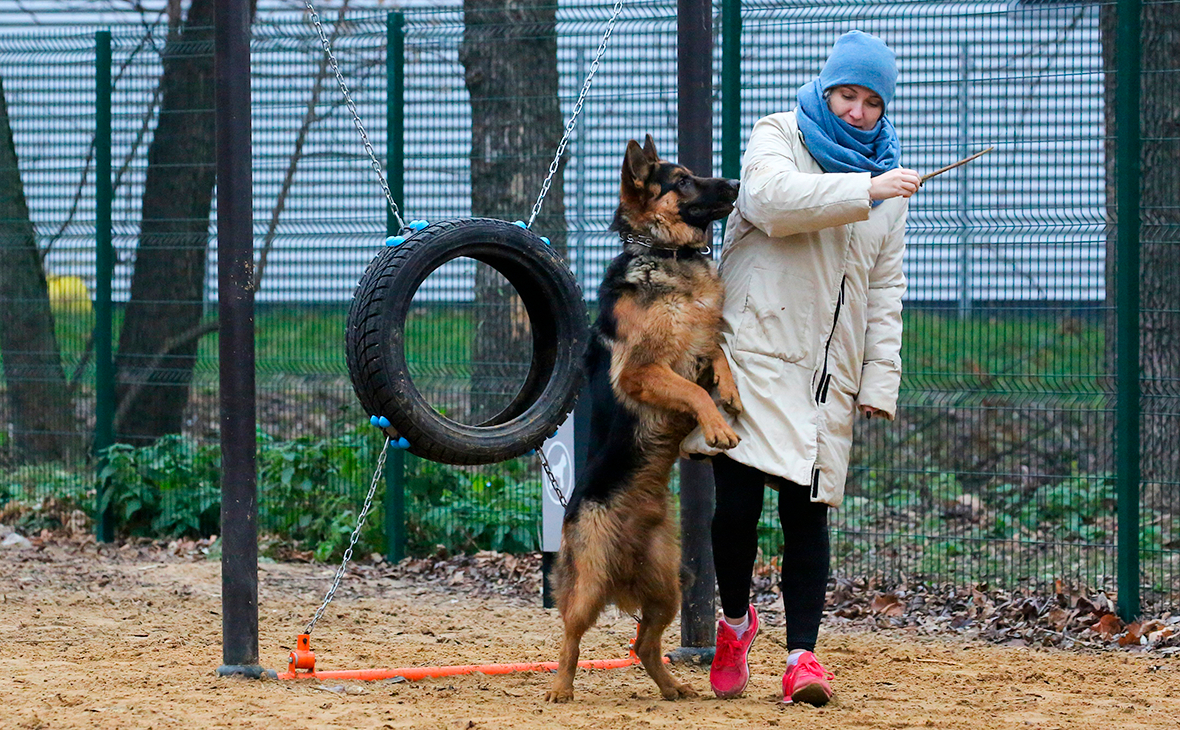 коронавирус собак это