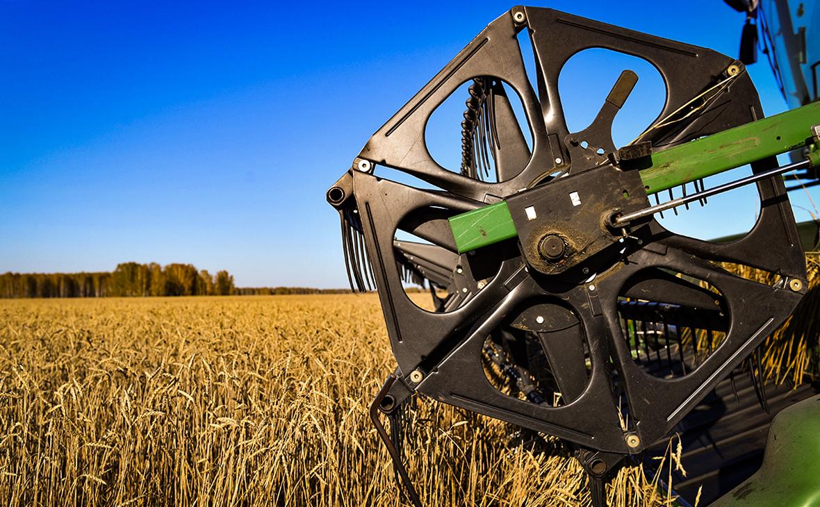 СМИ допустили запрет поставок во Вьетнам зерна из России из-за бодяка