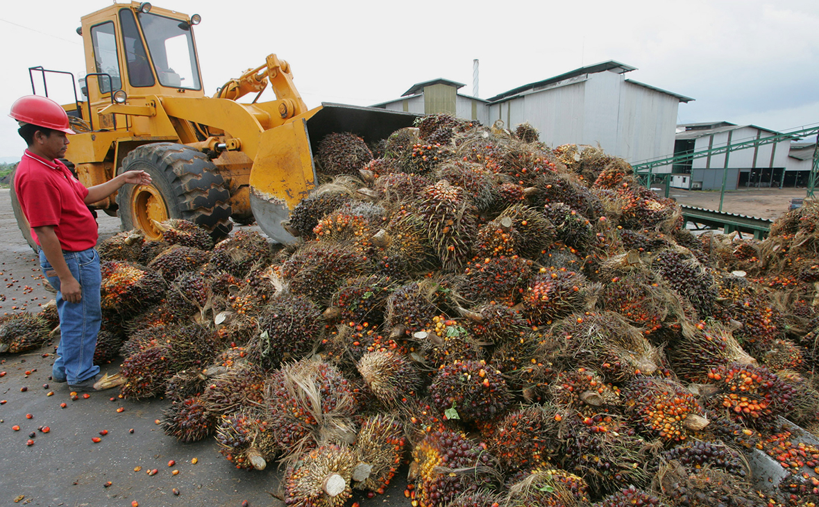 Власти обсудят запрет «грязного» пальмового масла в пищевой отрасли