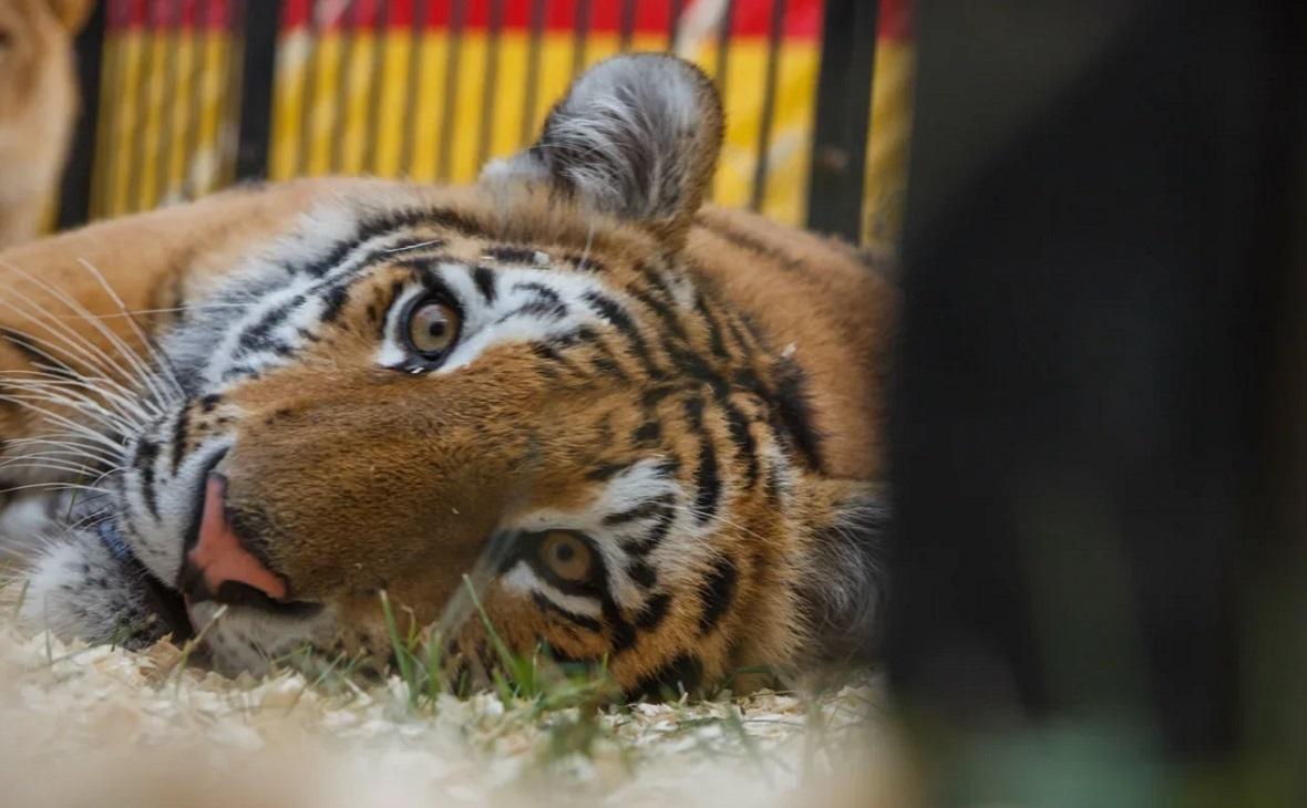 Уфа обзаведется зоопарком