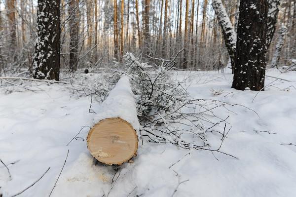 Фото:Вадим Ахметов, РИА URA.RU