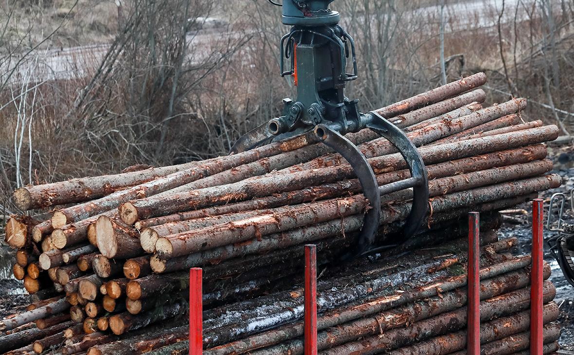 Заготовка древесного сырья для производства бумаги