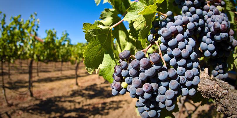 Фото: luxfon.com
