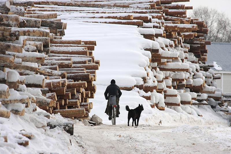 Ленинградская область.Перевалка леса