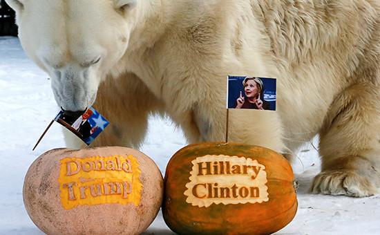 Белый медведь Феликс в зоопарке «Роев ручей» накануне выборов президента США. Красноярск, Россия